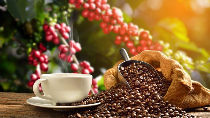 Is Coffee Healthy or Not
